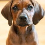 Welpenkurs Bestfriends Hundeschule Mönchengladbach